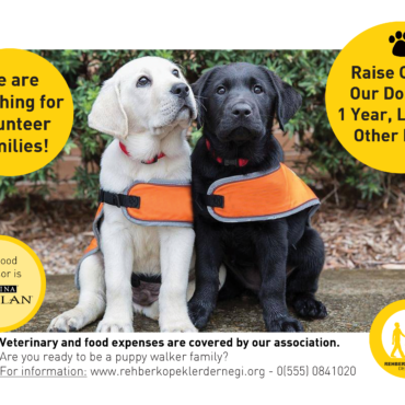 Guide Dogs Association searching for Volunteer Families!